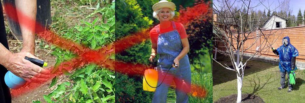 Меры предосторожности при опрыскивании раствором медного купороса