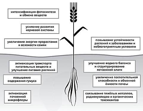 Действие гуматов на растение