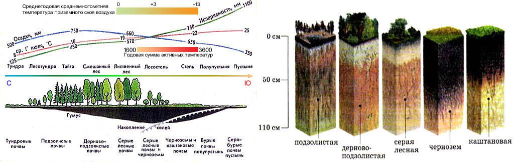 Типы почв в зависимости от климатических условий