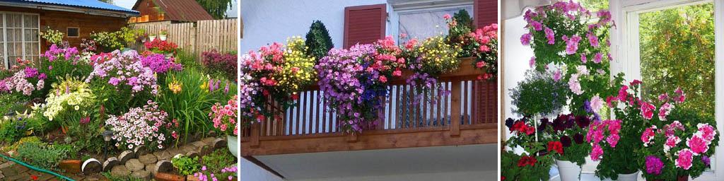 Ухоженные цветы на клумбе, на балконе и дома