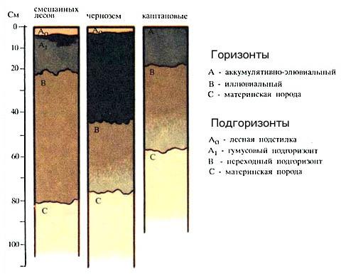 Структуры серых лесных, черноземных и каштановых почв