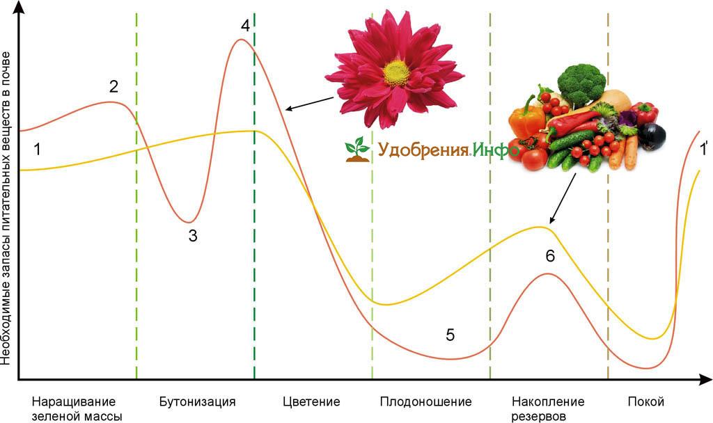 Необходимые запасы питательных веществ в почве для цветов и пищевых культур
