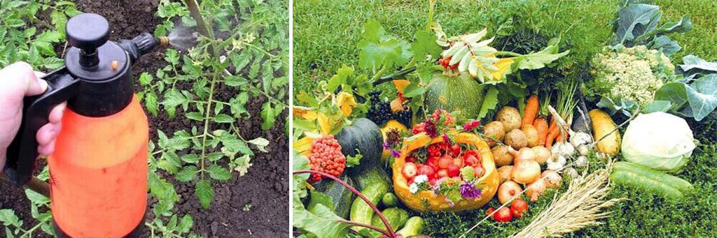 Удобрение растений во время цветения и его результат