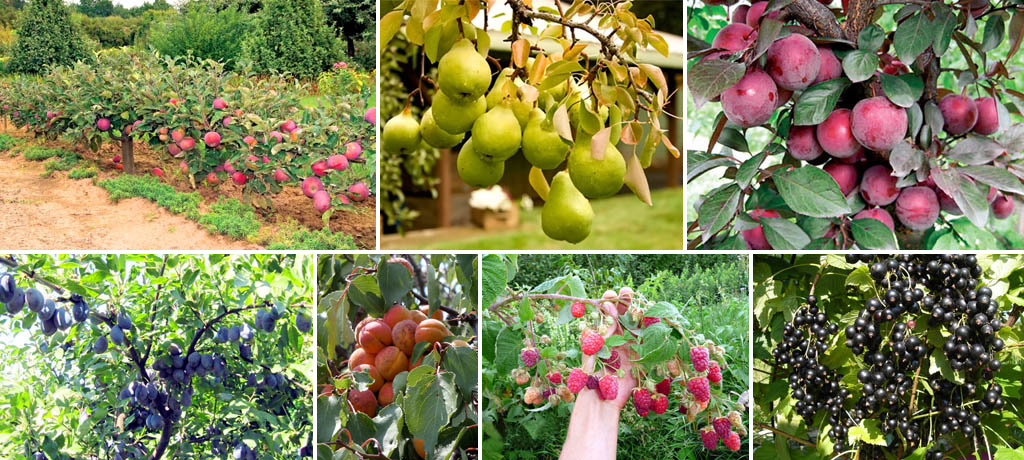 Урожай в саду