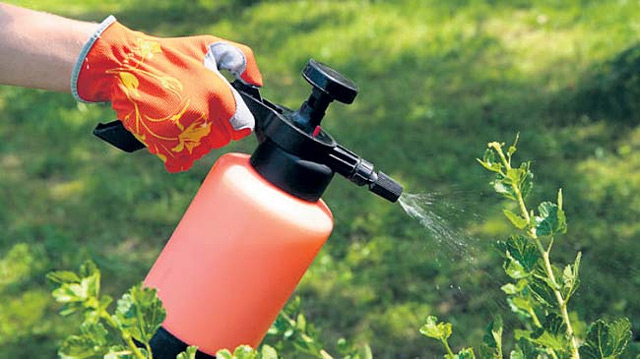 Борная кислота: применение для растений, подкормка, опрыскивание