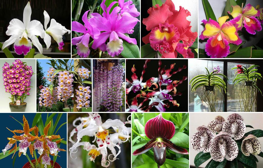 Цветы орхидей