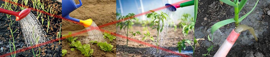 Как не надо и как нужно поливать растения для профилактики от нападения вредителей