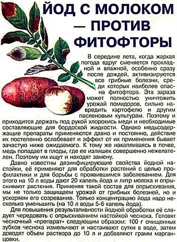 Как применять йод для картофеля против фитофторы