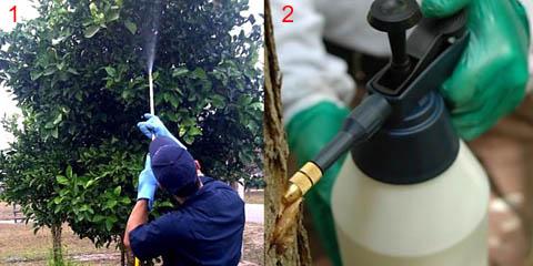 Меры предосторожности при обработке растений раствором железного купороса