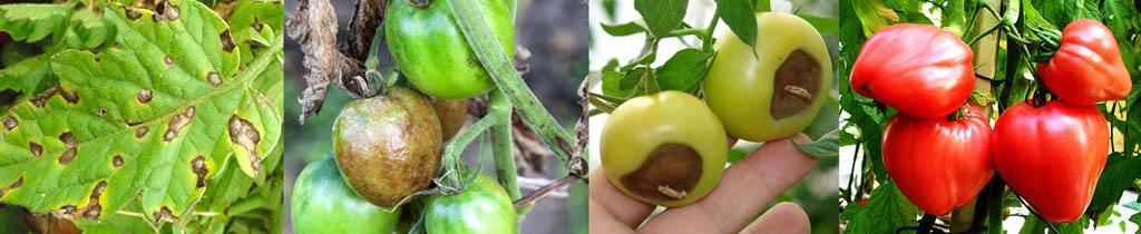 Признаки болезней растений, вызываемых недостатком йода
