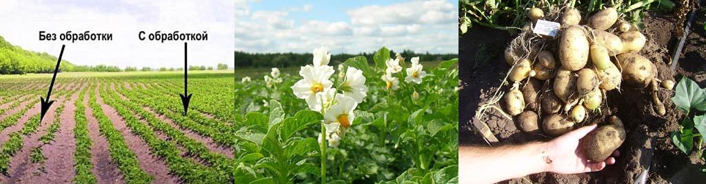 Результаты применения регуляторов роста в сельском хозяйстве