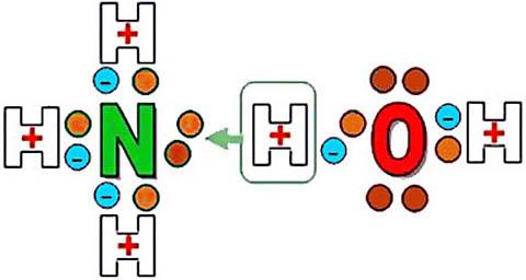 Схема образования водородной связи между молекулами воды и аммиака