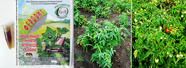 Действие на растения препарата Феровит совместно со стимуляторами роста