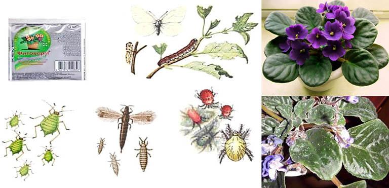 Объекты поражения Фитовермом и действие биоцида на растения