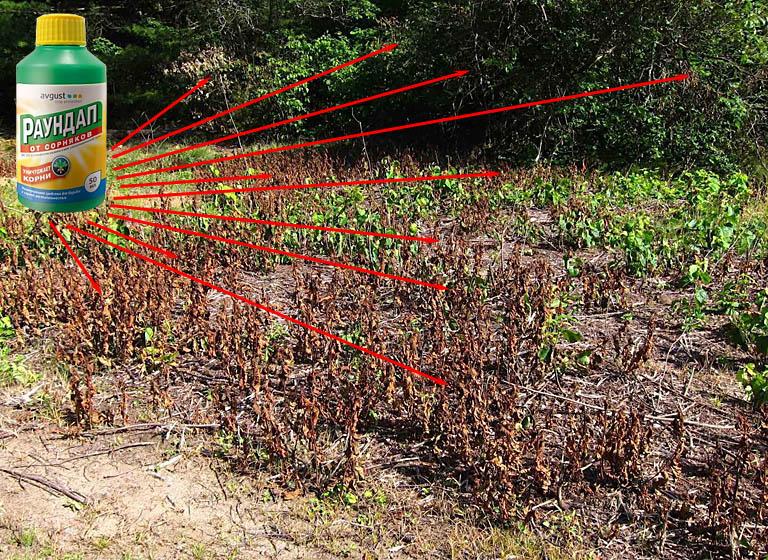 Действие гербицида Раундап на растения