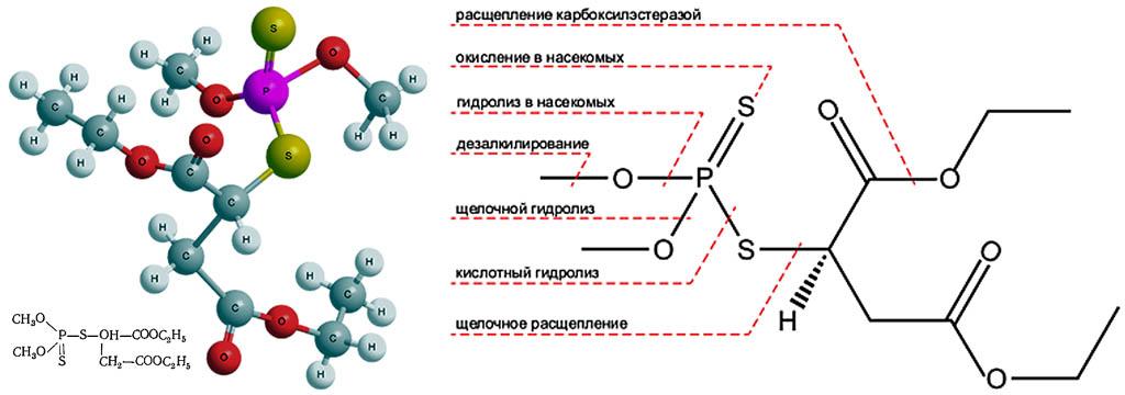 Химическая формула и схема действия карбофоса