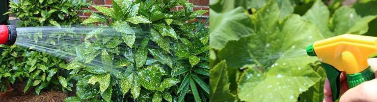 Как можно опрыскивать растения Цитовитом