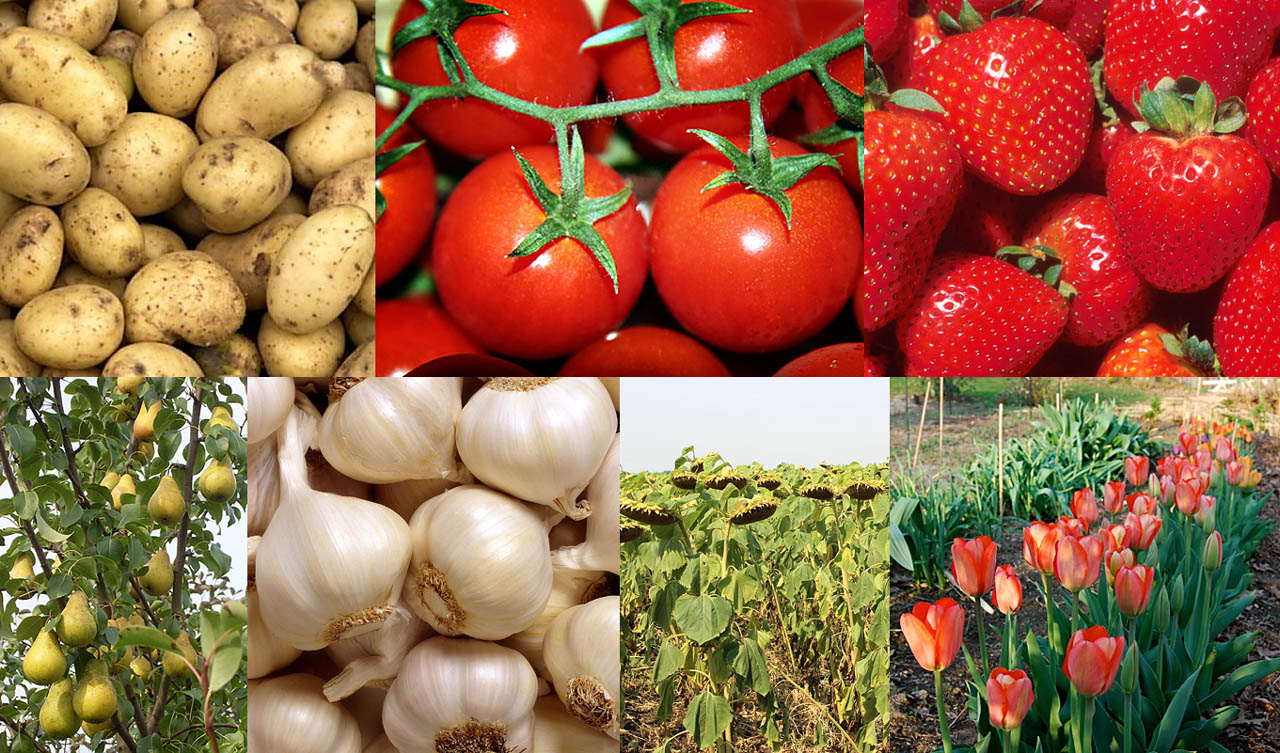 Вид сельхозпродукции в результате планомерного применения Цитовита