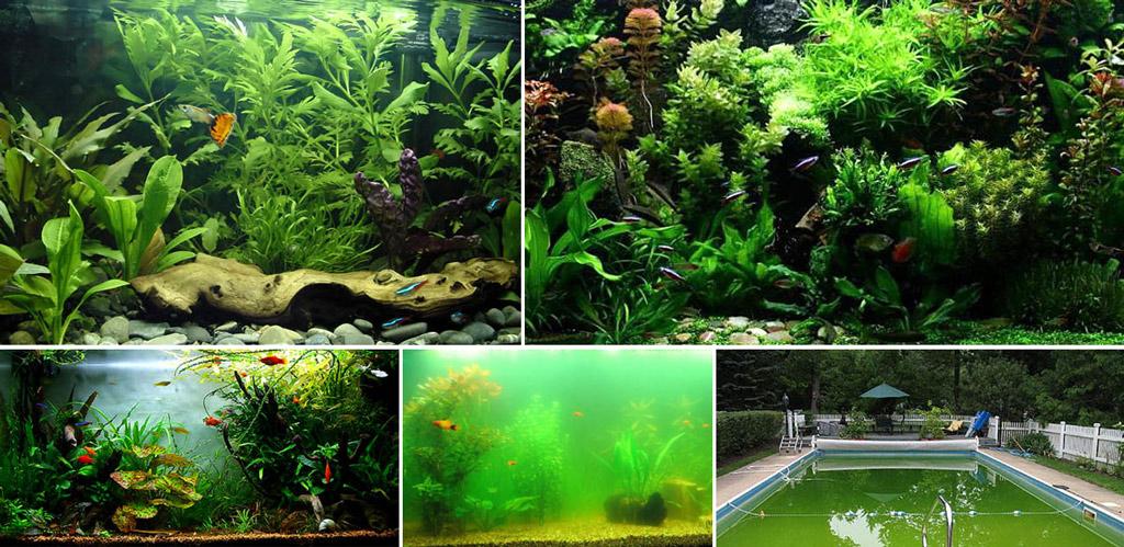 Чистые от водорослей и заросшие ими искусственные водоемы.