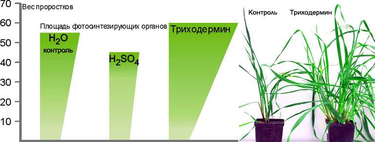 Сравнительные данные применения для защиты растений биоцида (медного купороса) и триходермина