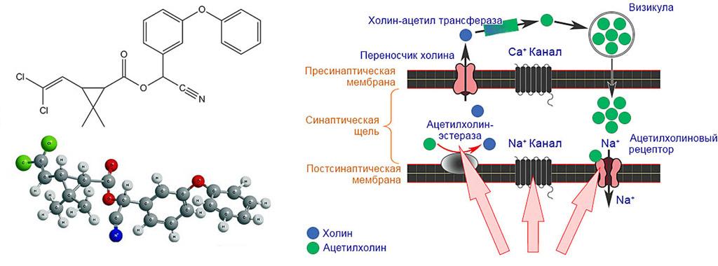 Расфасовка, химическая формула и механизм действия инсектицида Фастак
