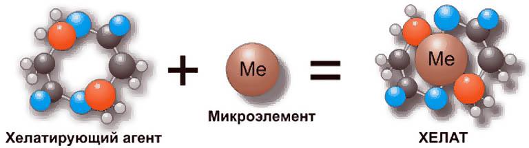 Схема образования хелатного комплекса.