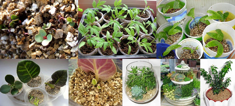Области применения вспученного вермикулита для растений