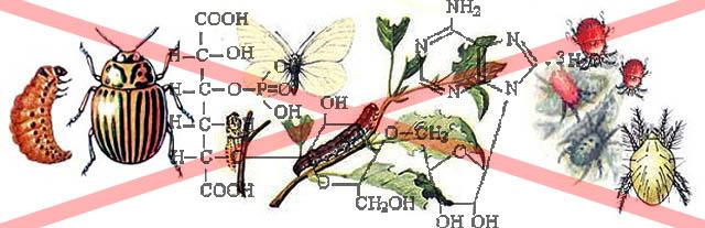 Опасные вредители садово-огородных культур, полностью уничтожаемые битоксибациллином
