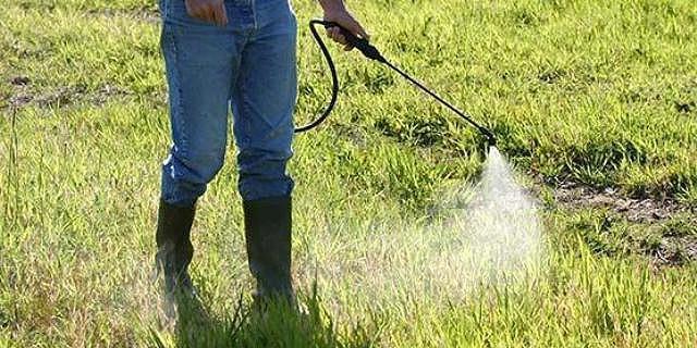 Обработка почвы довсходовым гербицидом