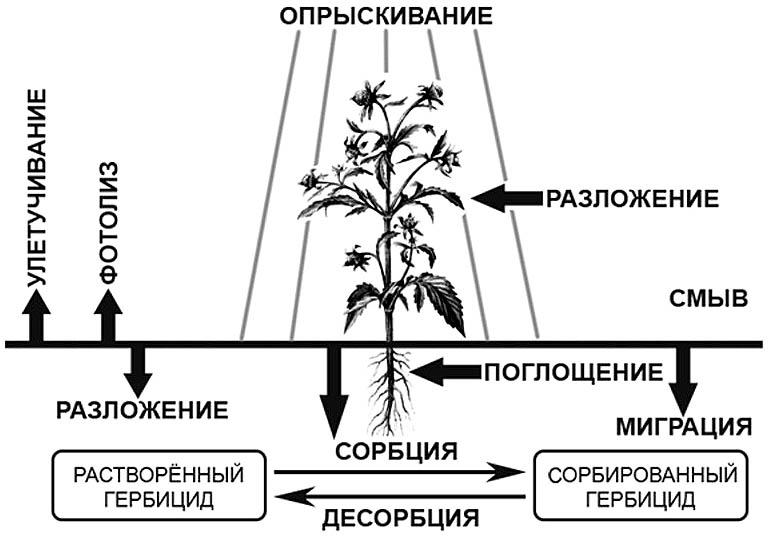 Схема действия гербицида Ураган Форте.