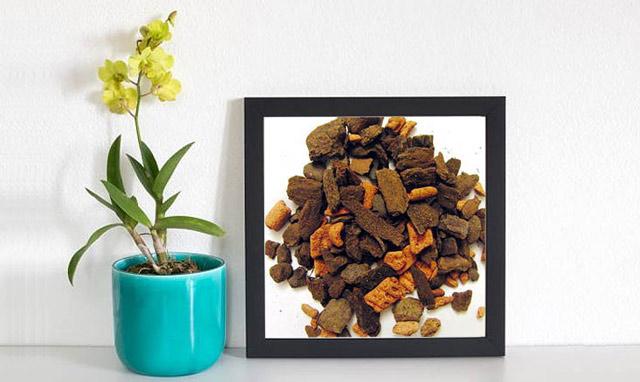 Комнатная орхидея и искусственный субстрат Серамис для нее