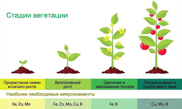 Потребность растений в микроэлементах на разных фазах развития.