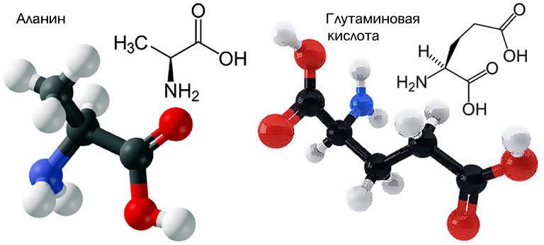 Химические формулы аланина и глутаминовой кислоты
