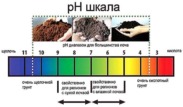 Признаки кислых, нейтральных и щелочных почв