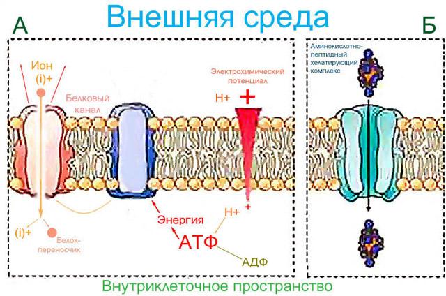 Схемы естественного поглощения питательных веществ растениями и действия препарата Изабион