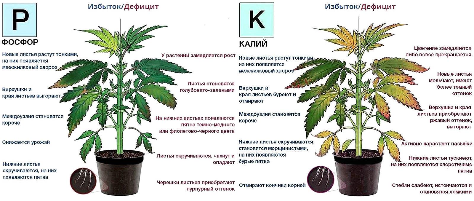 Признаки избытка и недостатка в растениях фосфора и калия
