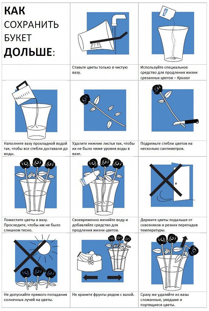 Инструкция по применению препаратов Кризал для ухода за срезанными цветами