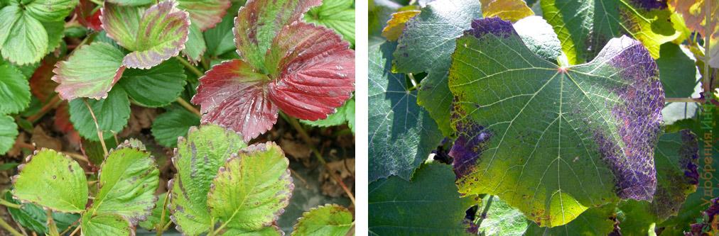 признаки нехватки фосфора у растений