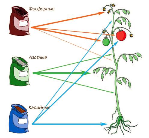 Действие основных питательных веществ на растения
