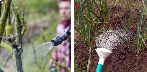 Способы подкормки растений раствором борной кислоты