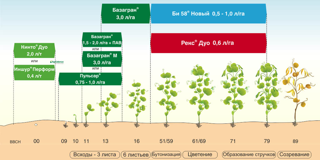 Схема защиты гороха с применением гербицидов Базагран и Базагран М