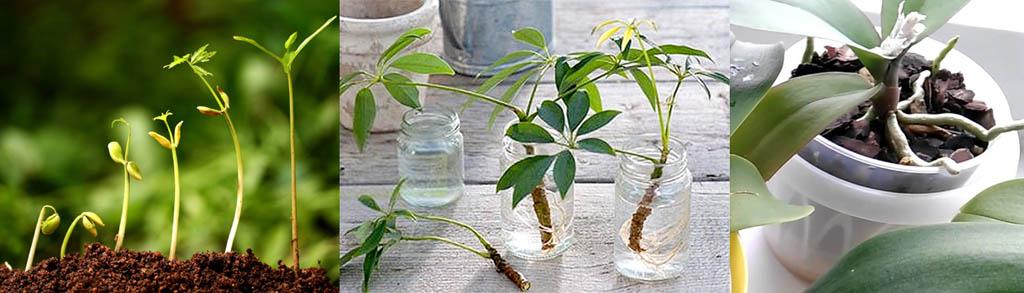 Область действия на растения препарата Рибав экстра