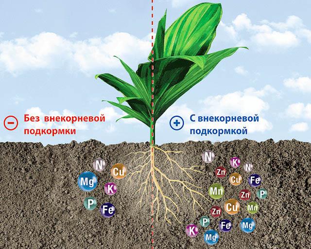 Влияние внекорневой подкормки на развитие сеянцев в открытом грунте