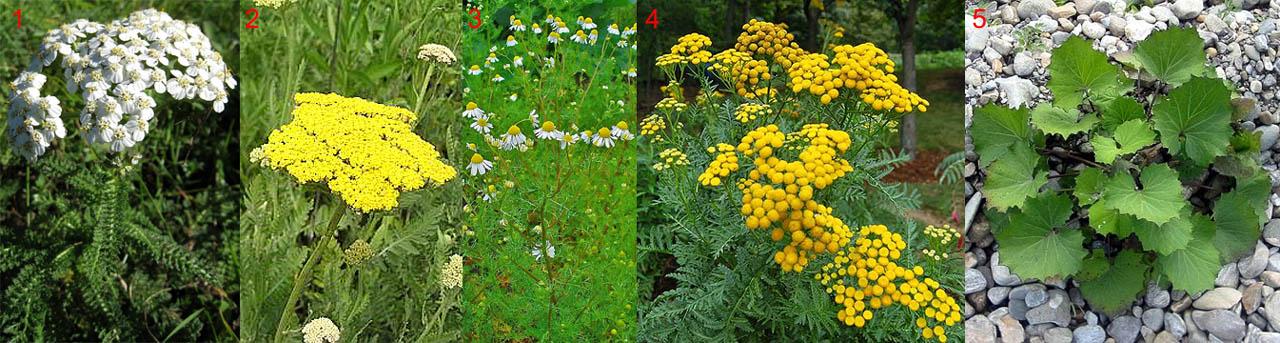 Растения, частично пригодные на зеленое удобрение