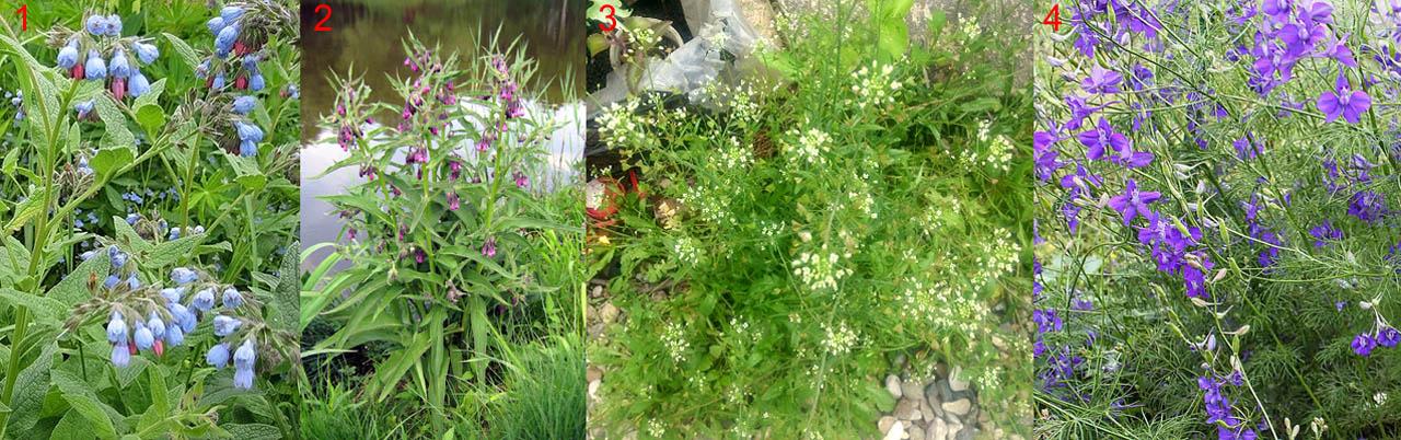 Растения, пригодные на получение зеленого удобрения аэробным способом