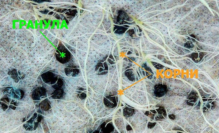 Прорастание корнями растений гранул удобрения ОМУ