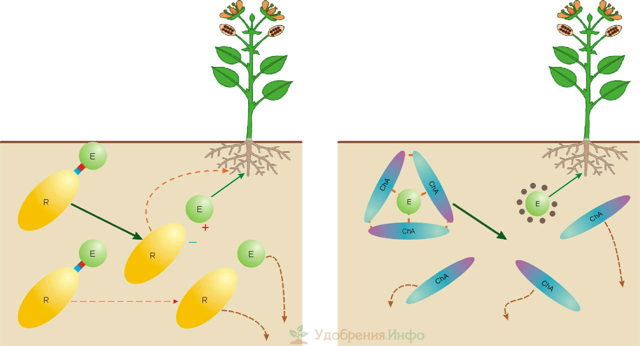 Поведение в почве солевого минерального и хелатного удобрения