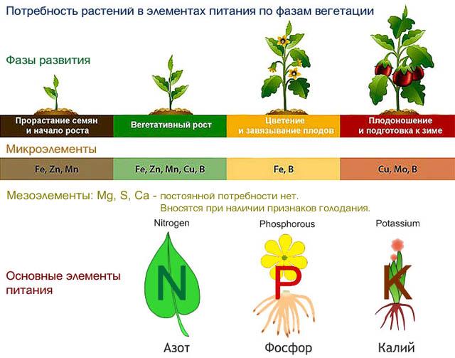 Обощенные потребности растений в элементах питания по фазам вегетации