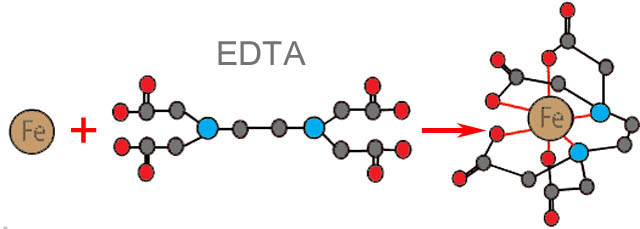 Схема образования хелата этилендиаминтетруксусной кислотой (EDTA)