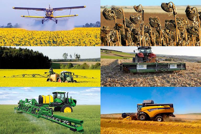 Десикация сельскохозяйственных культур и ее результаты